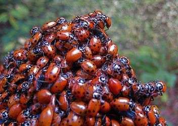 Love Bugs - Kostenloses image #308267