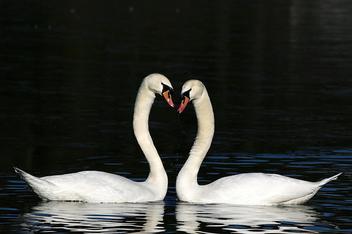 Valentine day - Kostenloses image #308637
