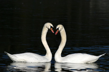 Valentine day - image gratuit #308637