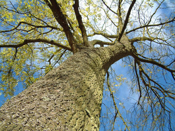 Tree - image gratuit #310357