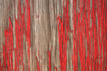 Red wood texture - Free image #310847