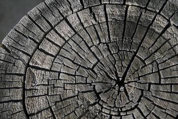 Log Texture - image gratuit #311007