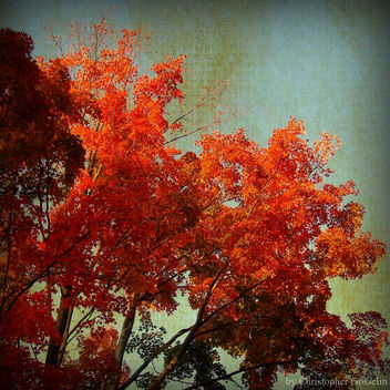 Autumn Prize - image #313567 gratis