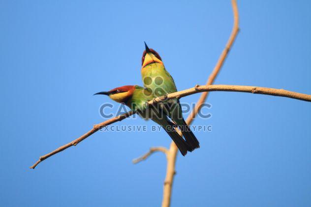 Aves de Martim-pescador no ramo - Free image #317347