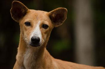 dog - Free image #318727