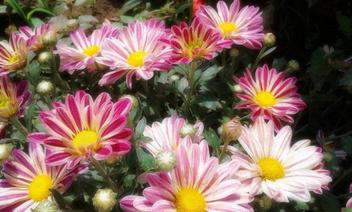 Summer blooms - бесплатный image #318777