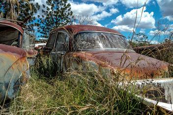 Long Grass - image gratuit #320157