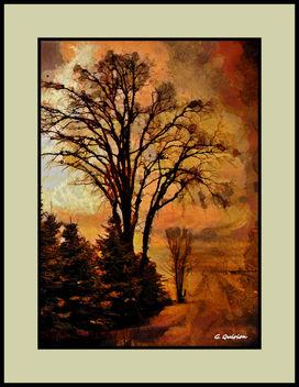 Mon arbre - Free image #322647