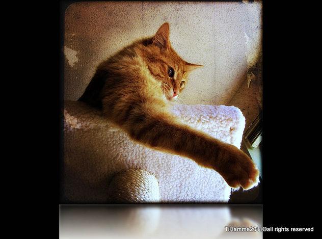 Quick , grab my paw , I'll save you~~ Explore # 474 - image gratuit(e) #323007
