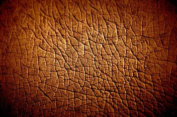 Hippopotamus Skin texture - Kostenloses image #323307