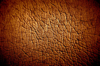 Hippopotamus Skin texture - Free image #323307