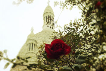 The rose of Montmartre - image gratuit #323497