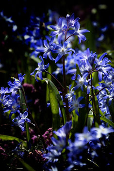 Blue - бесплатный image #324667