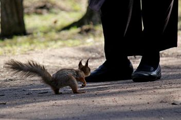 Squirrel and a pedestrian - бесплатный image #326557