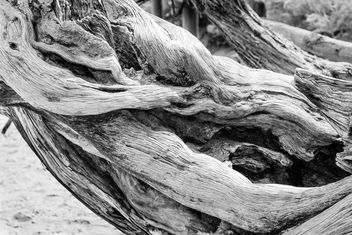 Tree Detail, Arches National Park - бесплатный image #326997