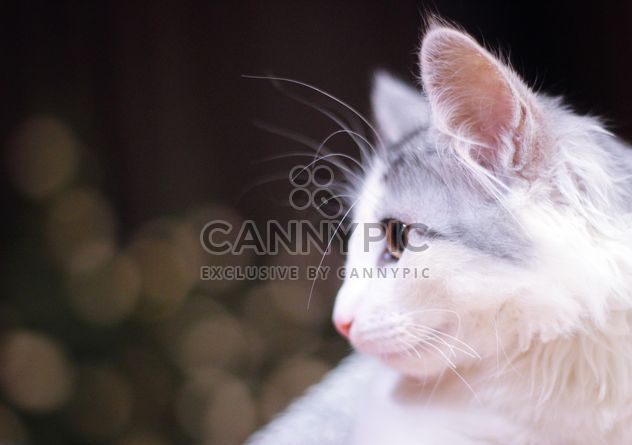 White cat portrait - Free image #327827