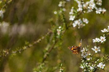 Spring - Free image #328037