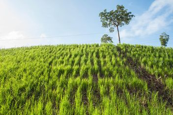 Green Slopes - image gratuit #328147