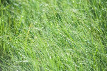dew on grass - image #328157 gratis