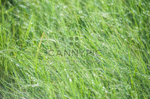 dew on grass - Free image #328157
