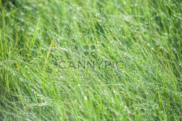 tau auf dem Gras - Kostenloses image #328157