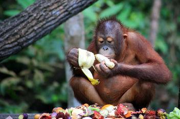 Treasure (Sabah, Borneo) - Free image #328397