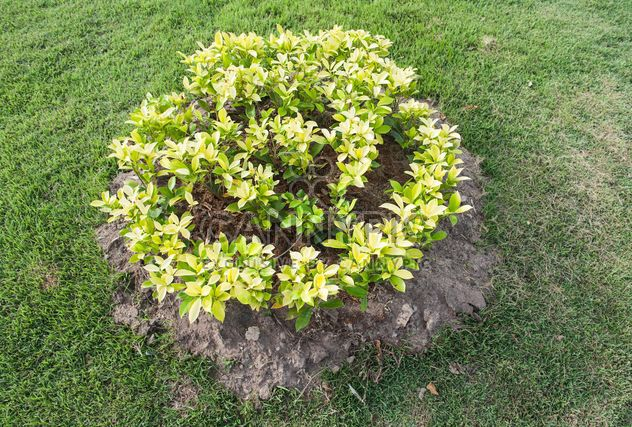 Small flowerbed in park - Free image #328437