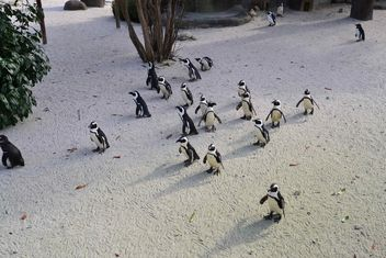 Group of penguins - Free image #328457