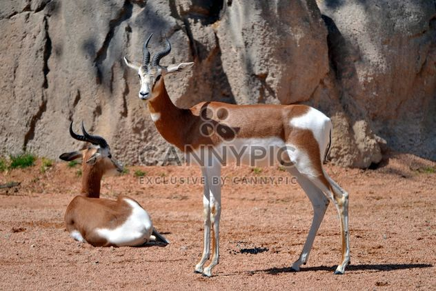 Antilope-Kind - Free image #328647
