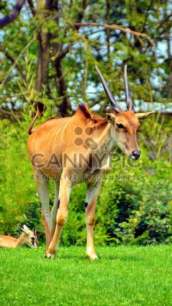 paar Antilope - Free image #328657