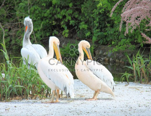Cormorants in park - Kostenloses image #329057