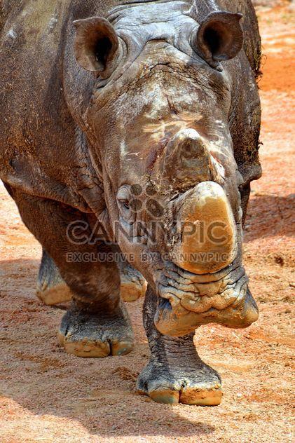 Носорог в парке - бесплатный image #329067