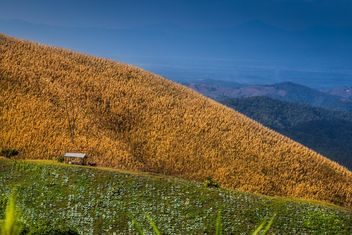 Beautiful mountain corn farm and green vegetables - бесплатный image #329657