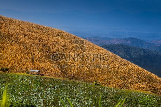 Beautiful mountain corn farm and green vegetables - Free image #329657