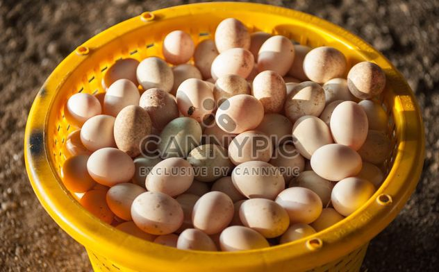 Duck eggs in yellow buckets - Free image #329667