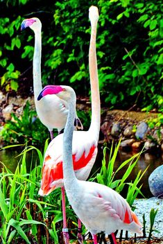 flamingos in park - image gratuit #329917