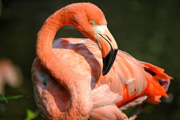 Flamingo in park - image gratuit(e) #329927