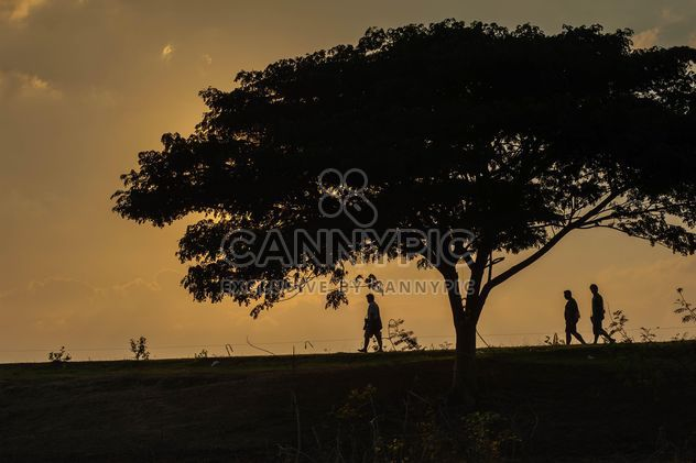 Huge tree at sunset - Free image #330007