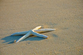 starfish on the beach - image #330017 gratis