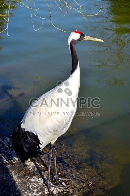 Crane in pond in a park - image gratuit #330297