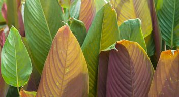 Green foliage of different tones - image gratuit #330957