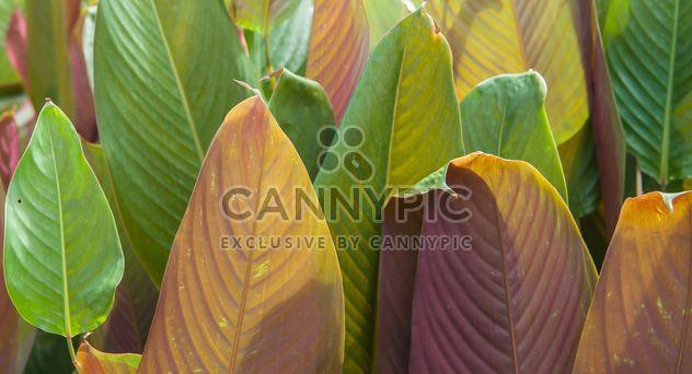 Зеленые листья различных тонов - бесплатный image #330957