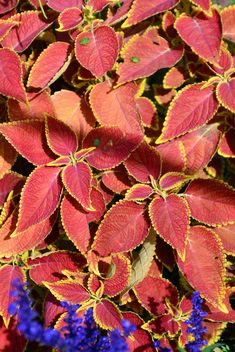 Autumn foliage - Kostenloses image #330977