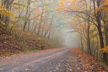 Misty Autumn Forest Road - HDR - Free image #333557