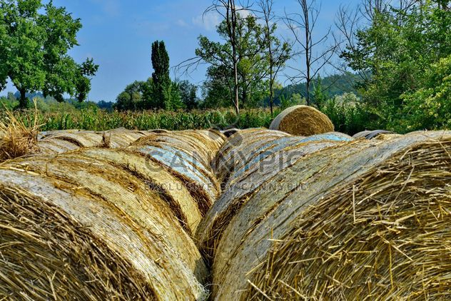 Countryside agriculture - image #333737 gratis
