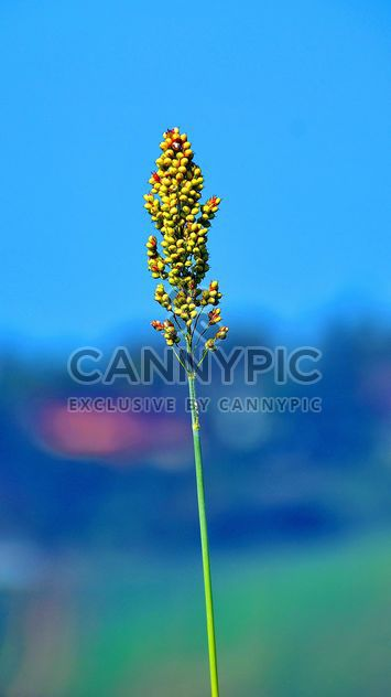 Agricultura campo - image #333747 gratis