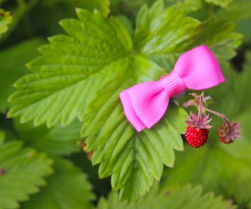 Strawberry in garden - image gratuit(e) #334287