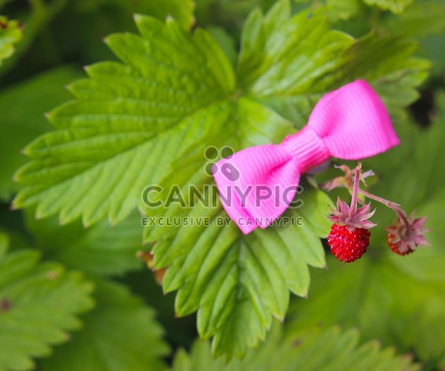 Strawberry in garden - Free image #334287