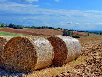 Haystacks, rolled into a cylinders - image gratuit #334747