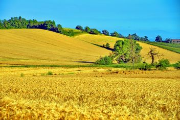 Golden wheat field - image gratuit #334807